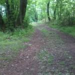 Kövek, erdei talaj, domb, ideális terepedzésre a helyszín :-)